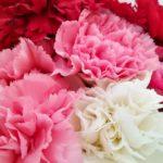 Virágok a jógastúdióban | Orienta.hu