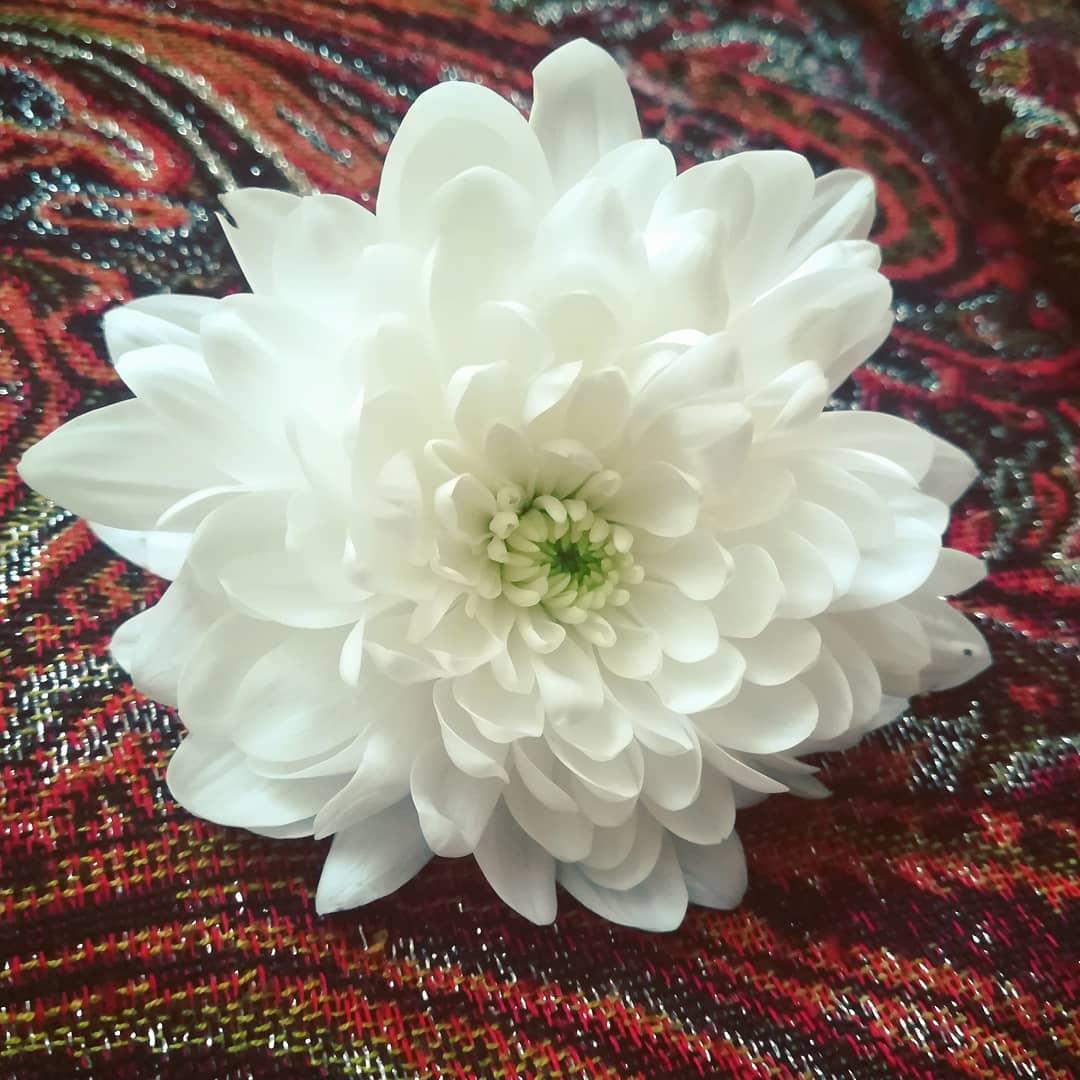 Mahaflower | Orienta.hu