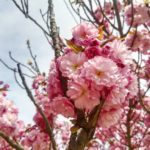 Virágzás | Orienta.hu