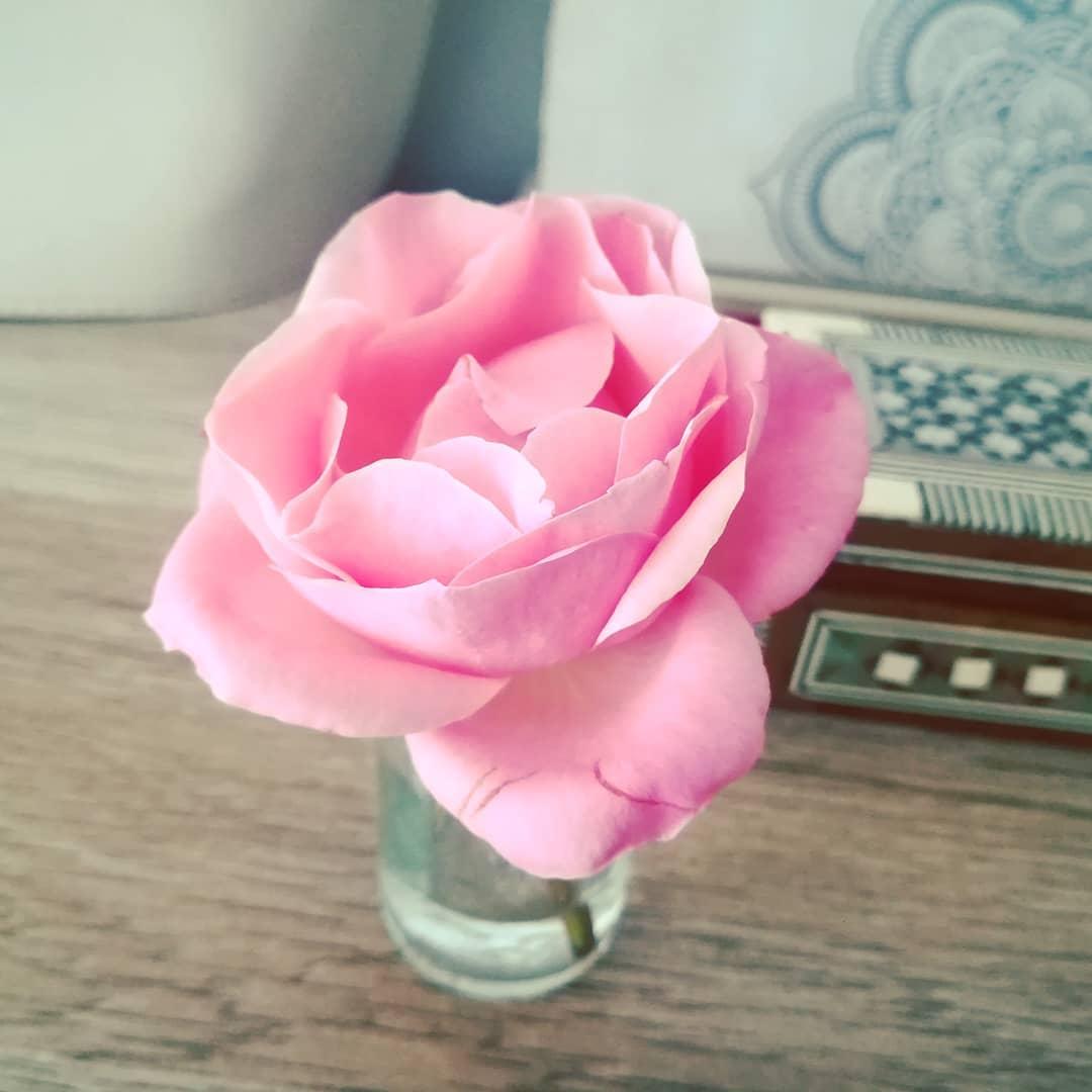 rózsaszínű rózsa keleti enteriőrben | Orienta.hu